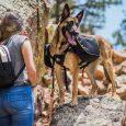 OllyDog Trekker RF Dog Pack